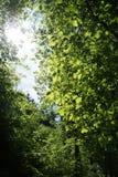 leśny spacer Zdjęcia Stock
