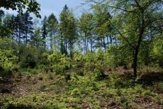 leśny spacer Zdjęcia Royalty Free