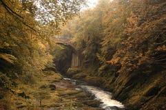 leśny strumienia Obrazy Stock