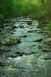 leśny strumienia Fotografia Royalty Free