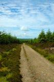 leśny toru Fotografia Stock