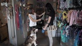 Le offerte del venditore della donna tricotta una sciarpa sul husky stock footage