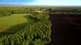 Le ombre degli alberi si trovano sul terreno arabile verde degli annuvolamenti del campo stock footage
