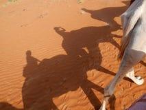Le ombre del cammello e del viaggiatore sulla sabbia arancio di wahiba abbandonano, l'Oman Fotografia Stock