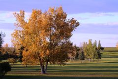 Le ombre lunghe di caduta allo scorrimento balza verdi Saskatchewan del golf Immagini Stock Libere da Diritti