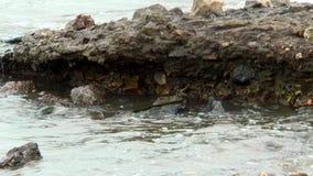 Le onde che si battono contro le rocce stock footage