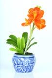 Le orchidee inventa Fotografia Stock Libera da Diritti