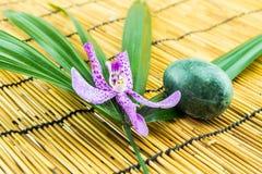 Le orchidee rosa di mokara con l'uovo modellano la foglia di pietra e verde su bamb Fotografie Stock