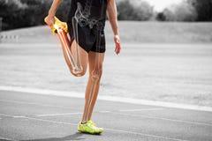 Le ossa evidenziate dell'atleta equipaggiano l'allungamento sulla pista di corsa Fotografia Stock