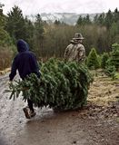 Le père et le fils portent l'arbre de Noël frais de coupure