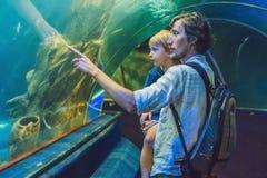 Le père et le fils regardent les poissons dans l'aquarium dans l'oceanarium Photo libre de droits