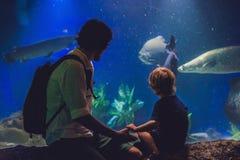 Le père et le fils regardent les poissons dans l'aquarium dans l'oceanarium Image libre de droits
