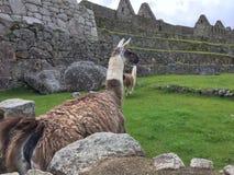 Le Pérou - le Machu Picchu Image libre de droits