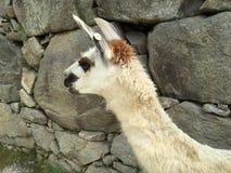 Le Pérou - le Machu Picchu Images libres de droits
