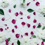 Le pétale fleurit avec l'espace de copie sur le fond blanc Configuration plate Images libres de droits