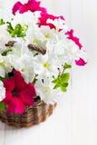 Le pétunia blanc et rose fleurit dans un panier wattled sur le CCB en bois Images libres de droits