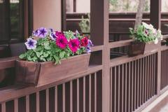 Le pétunia rouge et pourpre fleurit dans le pot sur le porche, fin  images stock
