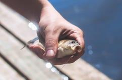 Le pêcheur juge un poisson propagé un crochet Photographie stock libre de droits