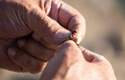 Le pêcheur met l'amorce sur un crochet de canne à pêche Photos libres de droits