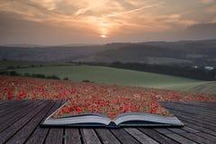 Le pagine creative di concetto del campo sbalorditivo del papavero del libro abbelliscono l'ONU Fotografia Stock