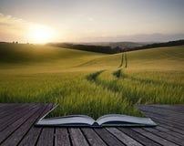 Le pagine creative di concetto dell'estate del libro abbelliscono l'immagine di grano f Fotografia Stock