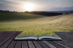 Le pagine creative di concetto dell'estate del libro abbelliscono l'immagine di grano f Fotografie Stock