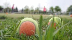 Le palline da tennis si trovano nell'erba sulla corte nei precedenti che la famiglia gioca a tennis fondo, spazio della copia video d archivio