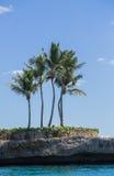 Le palme Immagini Stock