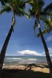 Le palme alla spiaggia di Launiupoko parcheggiano, vicino a Lahaina, Maui, Hawai Immagini Stock