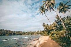 Le palme alte su Oceano Indiano tirano con le onde calme, l'aloe vera intorno Paesaggio tropicale dell'Asia Meridionale Fotografia Stock Libera da Diritti