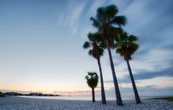 Quattro palme alla spiaggia Immagini Stock Libere da Diritti