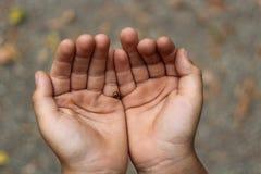 Le palme dei bambini Scarabeo sulle palme Immagini Stock