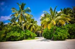 Le palme delle Maldive si avvicinano alla spiaggia Immagini Stock