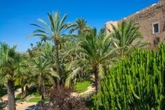 Le palme di EL Palmeral di Elche ELX Alicante parcheggiano e Altamira Pala Immagine Stock