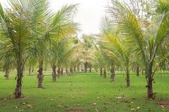 Le palme hanno allineato parallelamente in giardino con vegetazione verde Fotografie Stock Libere da Diritti