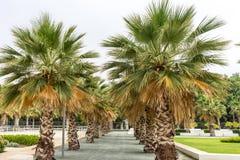 Le palme lungo il Malagueta tirano a Malaga, Spagna, Europa fotografia stock libera da diritti
