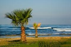 Le palme si avvicinano al mare Immagine Stock