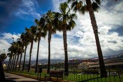 Le palme stanno nella linea dalla strada in Tenerife, Spagna Immagine Stock Libera da Diritti