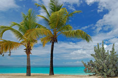 Le palme su grande Anse tirano sull'isola della Granada Fotografia Stock