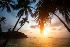 Le palme su un mare tropicale tirano durante il tramonto nave Immagini Stock Libere da Diritti