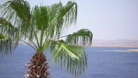 Le palme sulla spiaggia stanno volando sul vento video d archivio