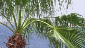 Le palme sulla spiaggia stanno volando sul vento stock footage