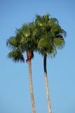 Le palme tropicali rimuovono il cielo blu Immagini Stock Libere da Diritti