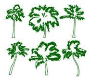Le palme tropicali stabilite con le foglie, maturano e plantule, siluette verdi isolate su fondo bianco Vettore royalty illustrazione gratis