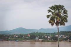 Le palmier à sucre est près du Mekong image libre de droits