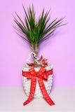 Le palmier avec le long vert part dans un pot en osier blanc avec un arc rouge Image libre de droits