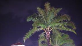 Le palmier est illuminé par la lumière au ciel foncé dans un emplacement tropical banque de vidéos