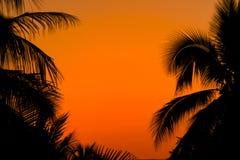 Le palmier laisse des cadres photos libres de droits