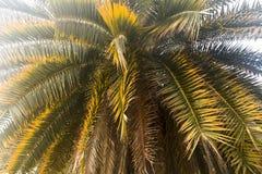 Le palmier part en ciel blanc image stock