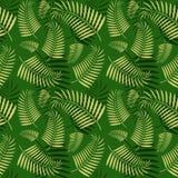 Le palmier sans couture part du modèle Photographie stock